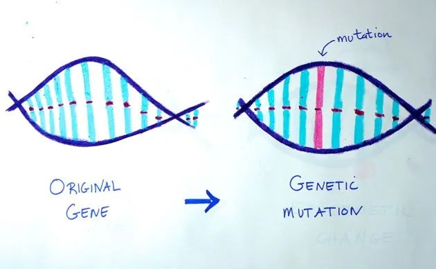 genetic changes affect risk for chronic illness through mutations