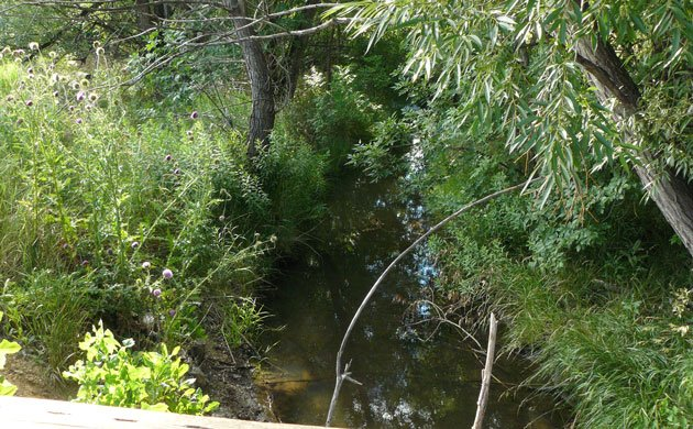 Clear Lush Stream from Bridge