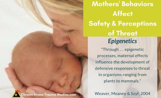 maternal behaviors and their effect on Exposure to babies will maintain maternal behaviors and the some factors that can affect maternal once the litter reaches 14-15 days old their eyes are.