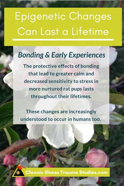 Perceptions of threat early in life can affect sensitivity to stress throughout a lifetime just as an early freeze can stunt the progression and development of buds into apples.
