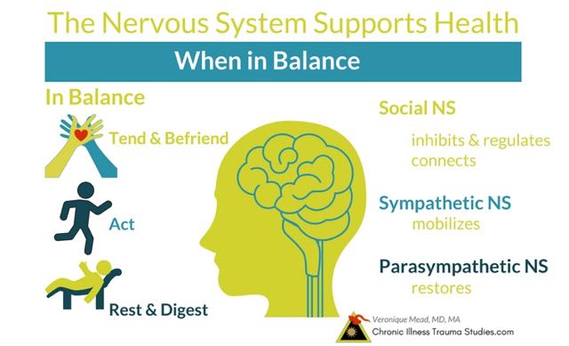 The nervous system supports health and decreases risk for disease when in balance. Social nervous system, fight, flight, freeze; sympathetic nervous system, ANS, parasympathetic, polyvagal #autoimmune #chronicillness #me/cfs #ra #rd #ms #ibd #fibromyalgia #parkinson's #alzheimer's #IBD Chronic Illness Trauma Studies (CITS) _Mead
