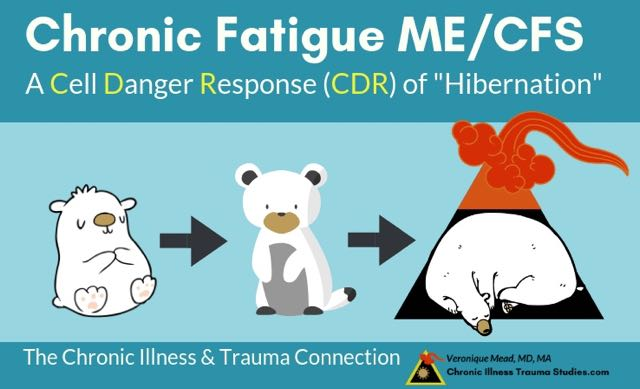 Chronic fatigue arises when the cell danger response is caught in freeze or gets stuck in states similar to hibernation_Mead_CITS
