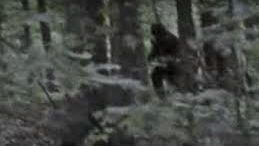 Featured Image | And So It Began | My First Encounter with Bigfoot