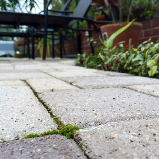 Moss on the patio, wide view