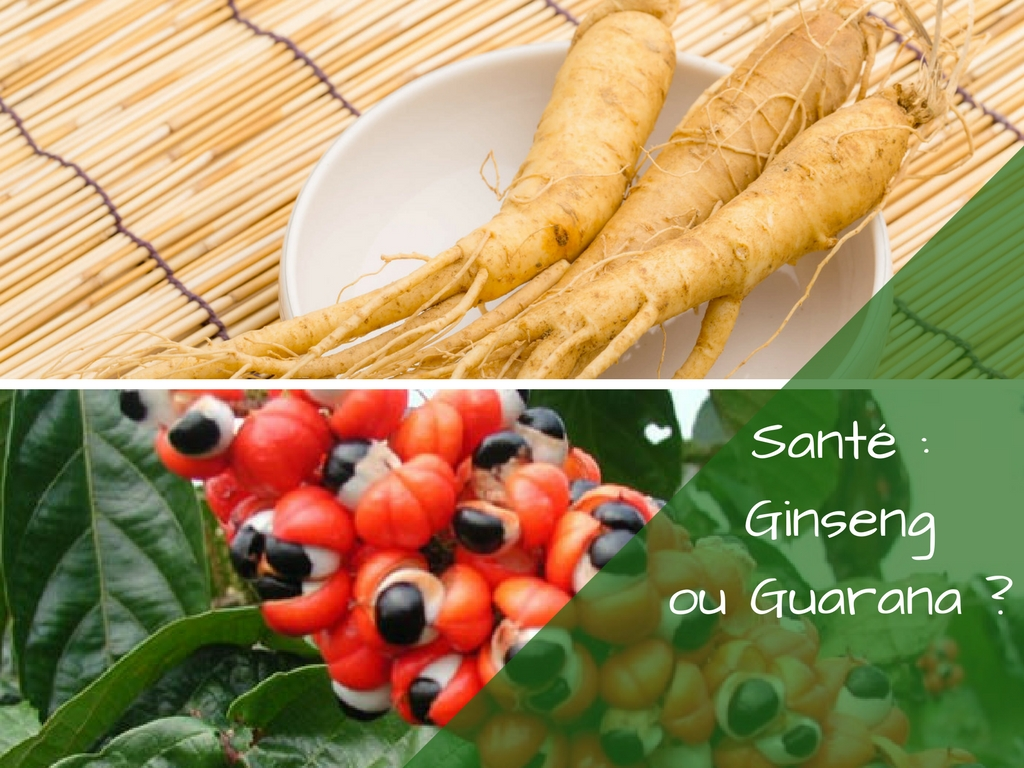 Ginseng ou Guarana, quelle plante pour booster l'énergie ?