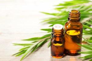 Tout savoir sur l'huile essentielle de Tea Tree