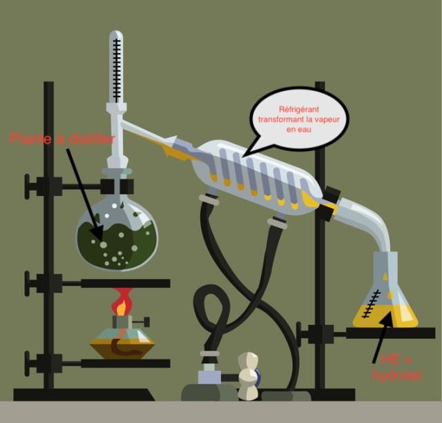 aromathérapie - extraction par distillation