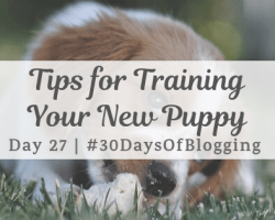 Tips for Training Your New Puppy | Day 27 of 30 Days of Blogging