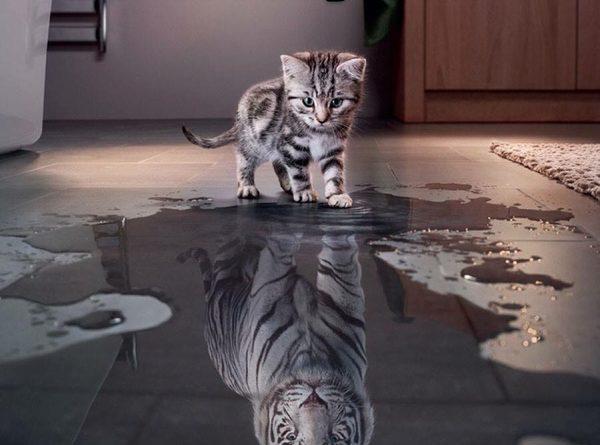 cat-humor-believe-in-yourself-kitten-tiger-600x445