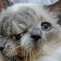 Two faced cat celebrates 12th birthday