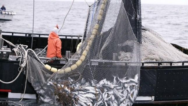 السفن الأوروبية تستعد للعودة إلى الصيد في المياه المغربية لمدة أربع سنوات.. مقابل 208 مليار سنتيم