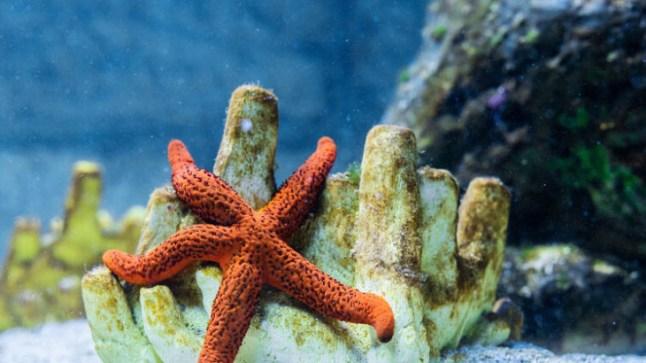 """اكتشاف أقدم حفرية للحيوان المائي """"نجم البحر"""" في الصحراء"""