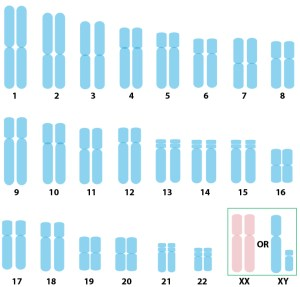 karyotype_normal