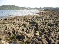 彦島西山の化石層
