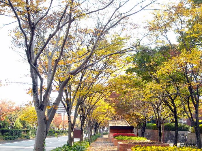 パークロード(日本の道100選)