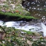秋を探しに石柱渓へ