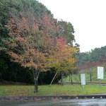 秋を探しに 江汐公園
