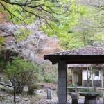 秋を探しに 水神公園