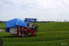 小野の茶畑