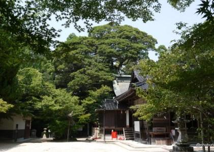 巨木を見に炎暑の平原八幡宮へ その3イスノキ