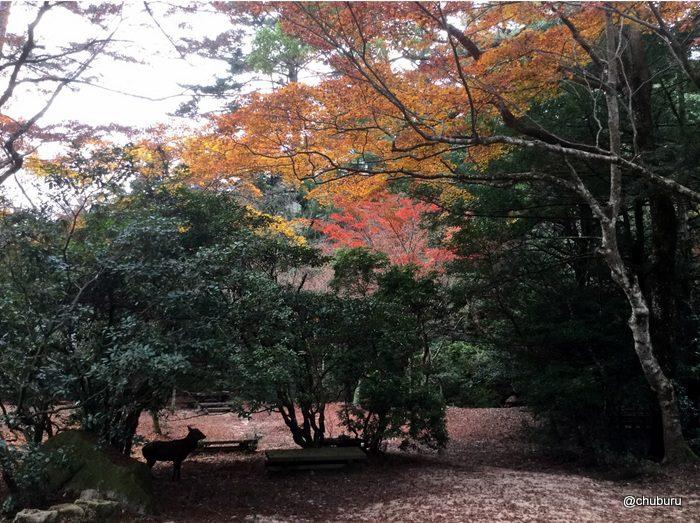 倉敷と宮島の旅は人で溢れていたよ。その10紅葉谷公園