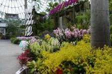 2018年初春の花を見る旅 その10とっとり花回廊フラワードーム1