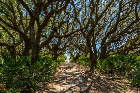 The Beach Road - Cumberland Island