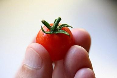 good bye dear tomato