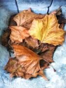 fall16_03