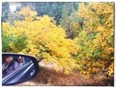 fall16_16