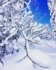snow-winter1612