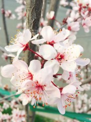 spring17_05