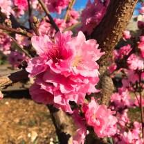 spring17_10