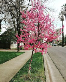 spring17_13