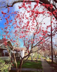 spring17_16