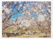 spring17_26