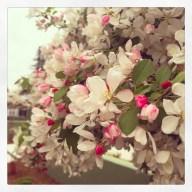 spring17_38
