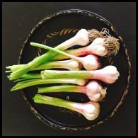 green-garlic