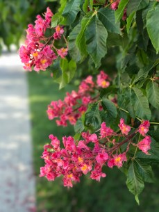 more_spring17_15