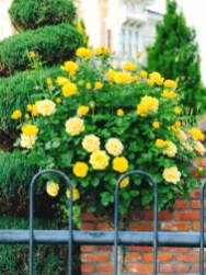 more_spring17_21