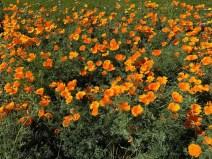 more_spring17_40