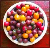 tomatos17_03