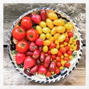 tomatos17_13