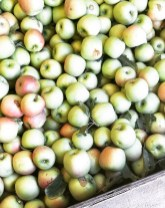 apples_and_things06