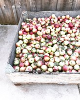 apples_and_things22