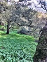 petaluma-trail_10