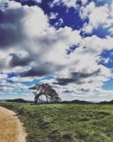 petaluma-trail_23