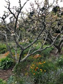 zen-garden_19