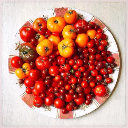 tomatoes18_7