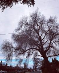 winter_19_67